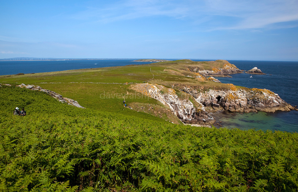 """View of the cliffs and bracken at Ardheen on the south, windward side of the Great Saltee, the larger of the Saltee Islands, off the coast of Co. Wexford, Ireland.  The """"Happy Hole"""" cave is visible,  and the rock in the right background is the """"MakeStone"""".  Behind can be seen Little Saltee, and Kilmore Quay, on the mainland."""