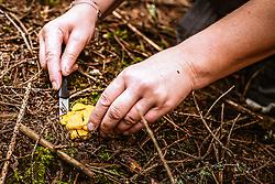 THEMENBILD - ein Pilzsammler schneidet Pilze mit einem Messer ab, aufgenommen am 03. August 2019 in Bruck a. d. Grossglocknerstrasse, Oesterreich // a mushroom picker cuts mushrooms with a knife in Bruck a. d. Grossglocknerstrasse, Austria on 2019/08/03. EXPA Pictures © 2019, PhotoCredit: EXPA/Stefanie Oberhauser
