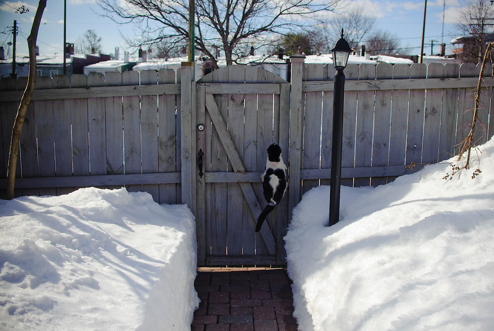 (photo by Matt Roth)..Neighbor Cat scaling our door to escape us, Sunday, February 14, 2010.