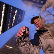 Volunteer Brian Armstrong patrols downtown Tornonto before dawn, trying to rescue birds that have become trapped by the light and tall buildings.  This morning he rescued a Virginia Rail.  He was too late to save a Yellow Bellied Sapsucker.