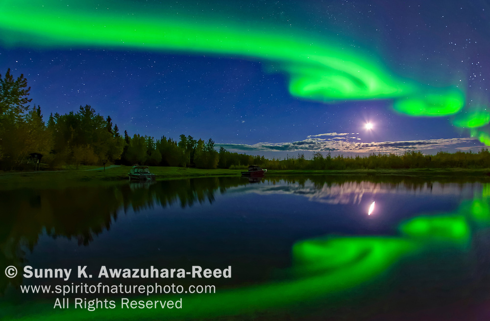 Bright green aurora curls with moon over Harding Lake with reflections, Fairbanks, Interior Alaska, Autumn.