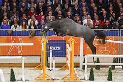 153 - Freestyle VK Z<br /> KWPN Stallion Selection - 's Hertogenbosch 2014<br /> © Dirk Caremans