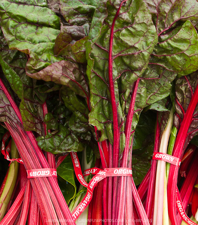 Organically grown white and red stem chard.
