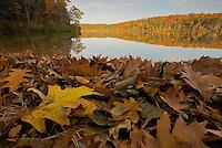 """Fall Splendor"".Autumn views at Walden Pond.  Fallen leaves on the shorline."