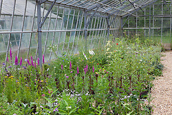 Butterfly friendly wild flowers in the glasshouse at Butterfly Jungles