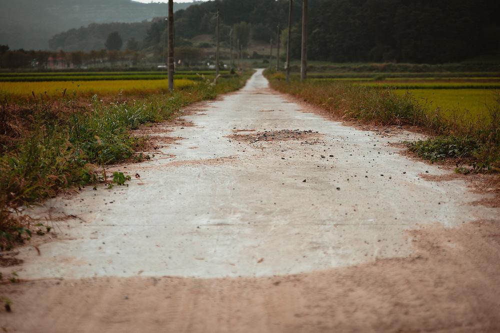 Rural road through the rice fields. Anseong, South Korea