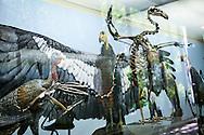 Bird Skeleton at the La Brea Tar Pits Museum in LA, CA.