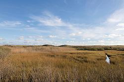 wetlands in Hampton Bays in New York