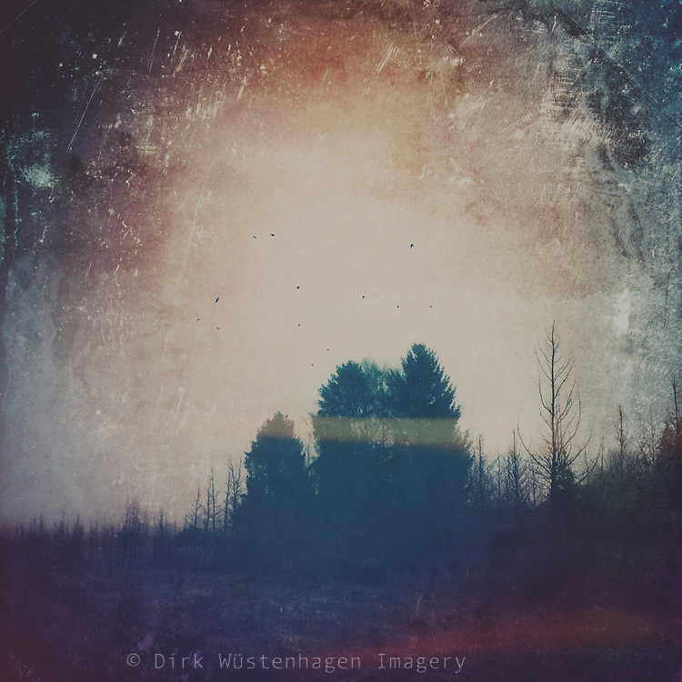 Tree silhouettes on a misty afternoon - textured photograph