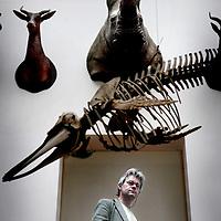 Nederland, Rotterdam,1 juni 2008..Jelle Roemer, directeur Natuurhistorisch Museum. Jelle Roemer, director of the museum of Natural History.