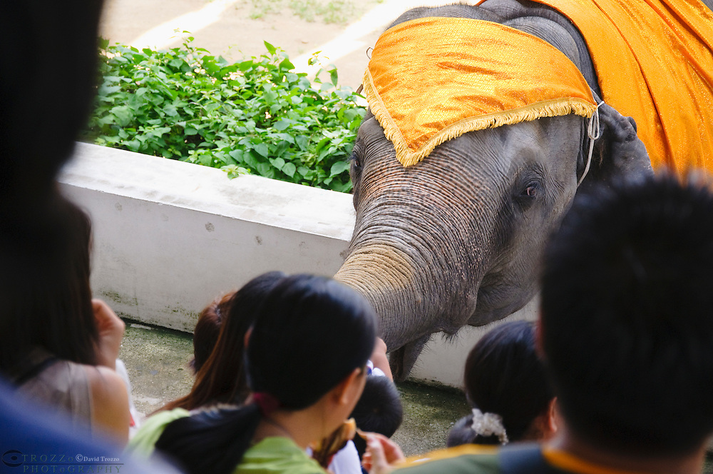 Samphran Elephant Ground & Zoo Nakhon Pathom province Thailand