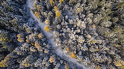 United States, Washington, Kittitas County, larches and snow (aerial)