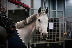 Philippaerts Olivier, BEL, H&M Legend Of Love<br /> Indoor Brabant<br /> © Sharon Vandeput<br /> 9/03/18