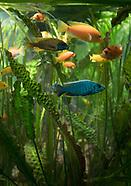 312 Aquarium