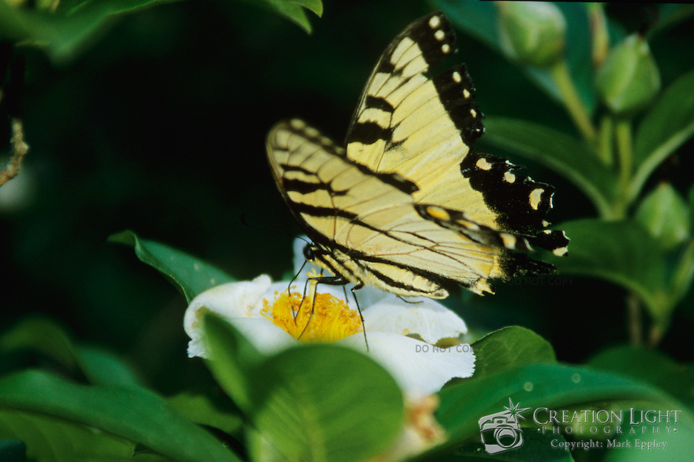 Yellow Butterfly at the Bernheim Arboretum in Kentucky