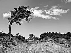 Alimini - Dune calme - 3 luglio 2011