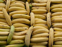 Rows of bananas