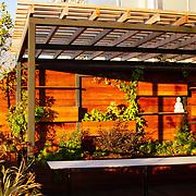 Tropical Rooftop Garden