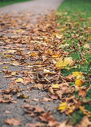 THEMENBILD - buntes Herbstlaub auf einem Weg, aufgenommen am 29. September 2019, Piesendorf, Österreich // colourful autumn leaves on a path on 2019/09/29, Piesendorf, Austria. EXPA Pictures © 2019, PhotoCredit: EXPA/ Stefanie Oberhauser