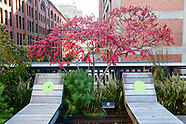High Line Horticulture - Oct 2020