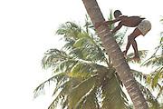 Boy climbing coconut tree