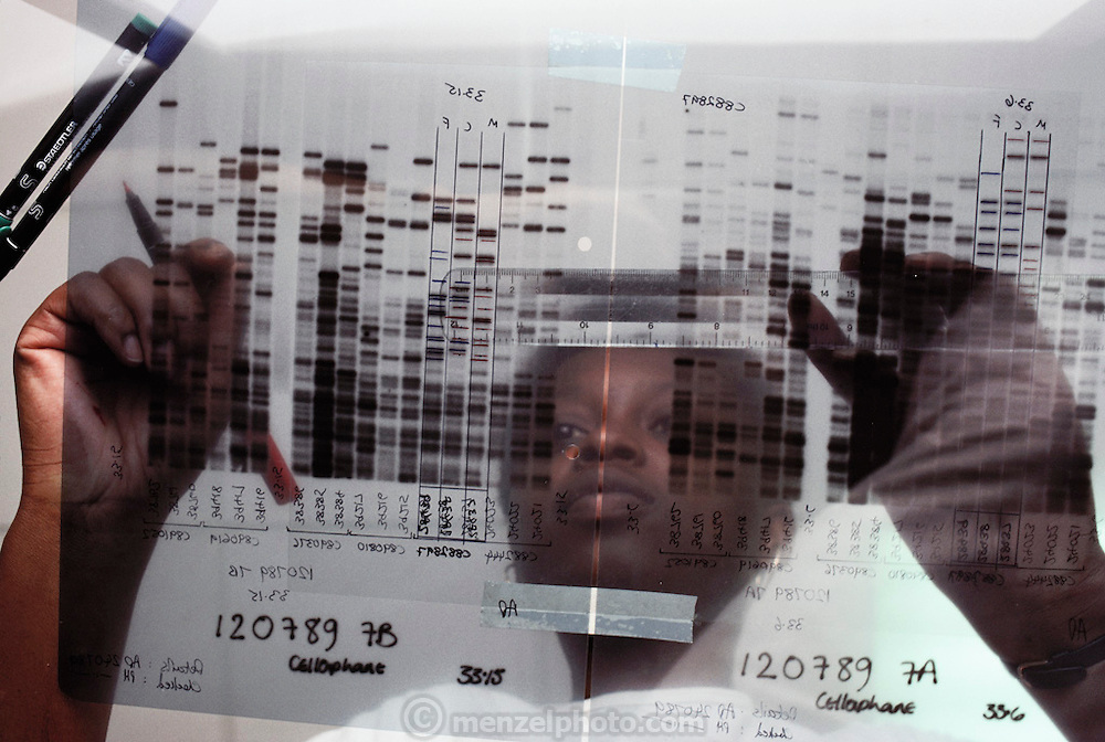 (1992) Glona Omodiagbe visually analyzes a DNA (deoxyribonucleic acid) autoradiogram at Cellmark Diagnostics, England's first Commercial DNA fingerprinting lab. MODEL RELEASED
