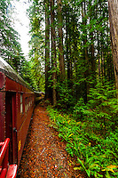 Skunk Train (tourist train) en route from Fort Bragg to Willits, Mendocino County, California USA