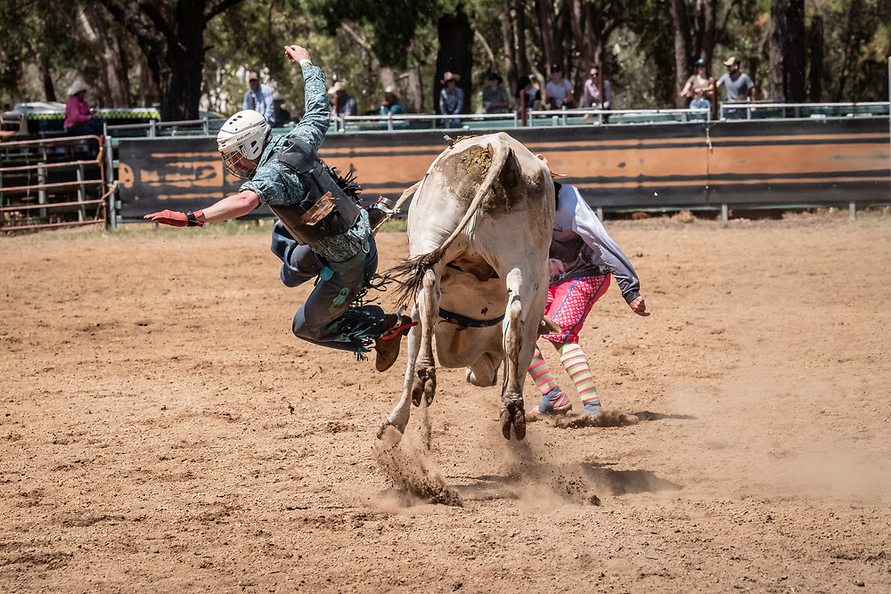 The Boddington Rodeo. Since its inception in 1976, the Boddington Lion's Club has successfully run the Lions Rodeo annually on the first Saturday in November each year at the Boddington Lions Rodeo Complex in Boddington, Western Australia.<br /> Pic:Tony MDonough