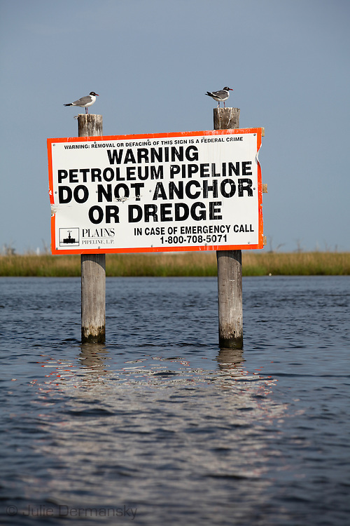 Birds on a sign put out by an oil company in Bayou Pointe-au-Chien where  the shrimp and crabbing season was officially  closed on May 29th, 2010 due to the BP oil spill that is making its' way into the lakes and bayous close to Pointe-au-Chien.