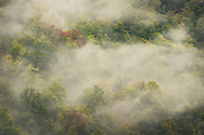 A late morning fog lifts above Blackwater Canyon, revealing the green shapes of trees and signs of autumn foliage creeping in beneath the mists.  West Virginia