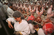 Poultry. Turkey slaughterhouse in Lincoln, California, USA.
