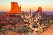 A ghost tree (dead Arizona Juniper) framing the Mittens at Sundown in Monument Valley, Arizona.