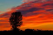 Tree and cloud at sunrise<br /> Portage La Prairie<br /> Manitoba<br /> Canada