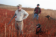 Shotguns broken over their arms, hunters John Davidson and Byron Grubb assess the land while upland game bird hunting near Minot, North Dakota, United States. Both hunters work the land to find pheasant and grouse with their faithful Black Labradors Annie and Danny respectively. These trained working dogs watch the bird as it comes down and run to collect and bring them back. This breed of dogs has a soft mouth which means they can pick up the birds and return them without damaging them. These men have been shooting for most of their lives and put considerable efforts into their hunting, efforts which reward them with wild game meats, none of which is wasted.