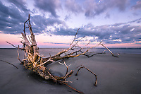 Driftwood along the beach on Sapelo Island, GA. A stunning undeveloped barrier island virtually untouched by human hands.