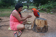 Surui woman making neclaces, watched by her parrot<br /><br />An Amazonian tribal chief Almir Narayamogo, leader of 1350 Surui Indians in Rondônia, near Cacaol, Brazil, with a $100,000 bounty on his head, is fighting for the survival of his people and their forest, and using the world's modern hi-tech tools; computers, smartphones, Google Earth and digital forestry surveillance. So far their fight has been very effective, leading to a most promising and novel result. In 2013, Almir Narayamogo, led his people to be the first and unique indigenous tribe in the world to manage their own REDD+ carbon project and sell carbon credits to the industrial world. By marketing the CO2 capacity of 250 000 hectares of their virgin forest, the forty year old Surui, has ensured the preservation, as well as a future of his community. <br /><br />In 2009, the four clans and 25 Surui villages voted in favour of a total moratorium on logging and the carbon credits project. <br /><br />They still face deforestation problems, such as illegal logging, and gold mining which causes pollution of their river systems