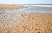 Worm casts in muddy sediment on the beach at Hunstanton, north Norfolk coast, England