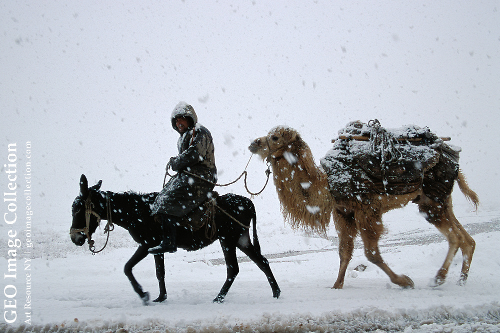 A man rides a donkey in a snow storm with his camel. The hardships of a medieval journey would not surprise, nor frighten, the inhabitants of Xinjiang, China.