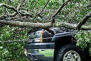Auto dammage caused by fallen tree in storm.