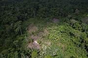 Slash & burn<br /> Amerindian agriculture<br /> Savanna <br /> Rupununi<br /> GUYANA<br /> South America