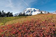 Lakes Trail, Mazama Ridge, near Paradise, Mount Rainier National Park, Washington, USA.