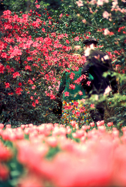 Stock photo of a couple walking hand-in-hand along the azalea trails at Bayou Bend.