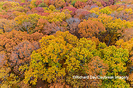 63876-02411 Aerial view of fall color trees Stephen A. Forbes State Park Marion Co. IL