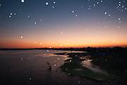 Thousand of insects flying over Chobe River at sunset, Chobe National Park, Botswana.
