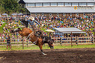 Bronco riding at rodeo during the Under the  Big Sky Music Festival in Whitefish, Montana, USA