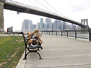 man reading with in the background the Brooklyn Bridge and downtown New York