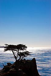 Lone Cypress, 17 Mile Drive, Monterey Peninsula, California, USA