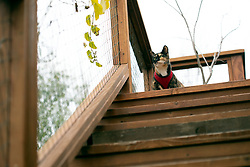 Zelda the cat keeps a close eye on her Oakland, Calif. home, Thursday, Feb. 18, 2021. (Photo by D. Ross Cameron)