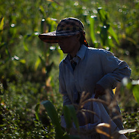 Saem Sokhey is a woman farmer in Cambodia, she makes a living by growing corn for sale locally.