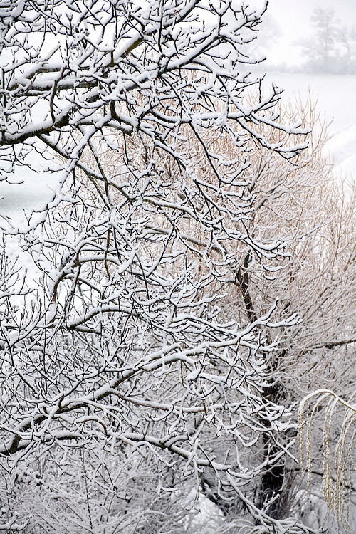 snow covered countryside landscape with trees